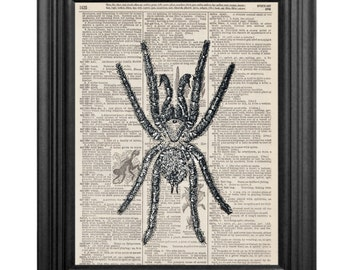 Dictionary Art Print - Spider- 8x10