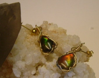 Bright Red to Green Fire Ammolite from Utah Deposit Wire Wrapped Earrings in Gold Filled Wire 115