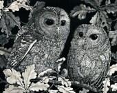 Blank Art Card Tawny Owlets in Oak Tree from Scratchboard design