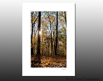 Woodland Autumn Sunrise Art Print, Nature Photography, Matted wall art Fits 5x7 inch frame, cubicle decor