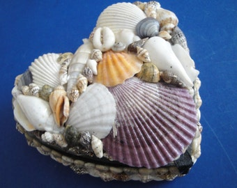 "Seashells Sea Shell 6"" Large Jewelry Box"