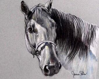Shadow Study...Original Pastel Horse Drawing
