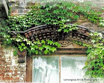 Ivy, Architectural Photography, Fine Art Print, Green Leaves, Windows, Brick Building, Urban Wall Art, Plants, Home Decor
