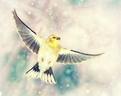Bird artwork, bird photography, flying bird, bird in the snow, goldfinch, yellow bird, pastel colors, pink teal aqua yellow, wings, dreamy