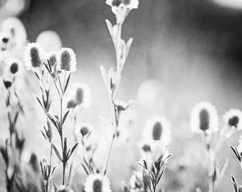 "Black and White Nature Photography - grey gray wall print botanical photograph neutral photo fine art photography, ""Hope Grows Amid Weeds"""