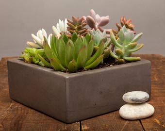 """Concrete Planter Centerpiece - 7"""" Square Centerpiece"""