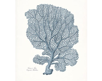 Coastal Decor Venus Sea Fan Sea Coral Giclee Art Print 8x10 French Blue