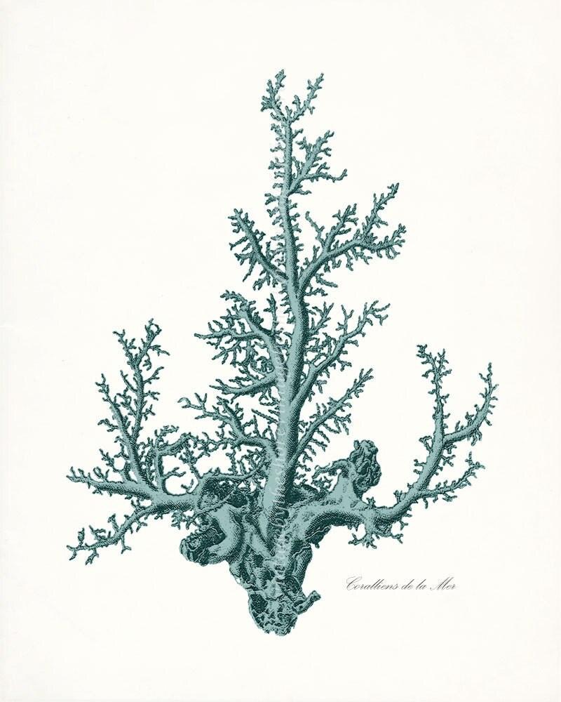 Coastal Decor Pacific Sea Coral Natural by vintagebytheshore