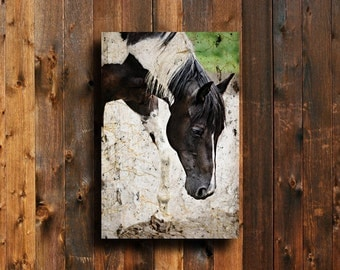 Painted Paint - Horse photography - Horse art - Horse decor - Horse canvas - Black and White Horse - Horse art canvas - Animal photography