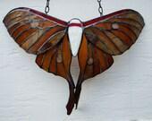 Shades of Amber and Brown Fantasy Asian Luna Moth