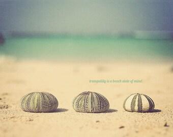 Seashell Art, Seashell Print, Seashell Photo, Seashells Art, Seashells Print, Seaside Art, Seaside Photo, Seaside Print, Oceanside Art