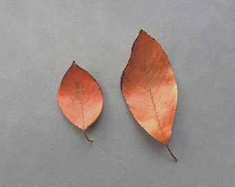 Red leaves. Still life fall foliage