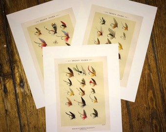 TROUT FLIES trio glorious fly fishing print set of three prints