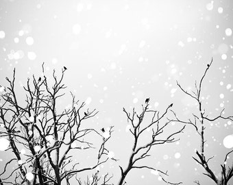 black and white photography birds winter photography 8x10 24x36 fine art photography snow falling birds flying photography bokeh black grey