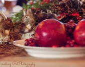 Christmas photography home decor holiday dining table brown red ivory green bottlebrush squirrels pomegranates fine art photo wall art