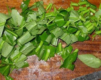 7 Chinese Spinach Seeds-1291