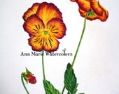 Pansies study, floral watercolor pencil drawing, 8 x 10, giclee or canvas print