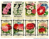 Vintage Seed Packets Flowers Set 1 Printable Digital Collage Sheet