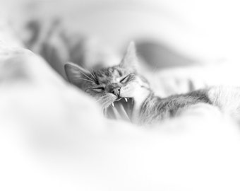 Cute kitten photography, cat yawn photograph, cute kitty photo print, sleepy bedtime wall decor for nursery, kids children room, black white