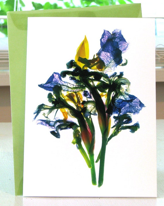 "Floral Note Card Todd's Pond Iris 5""x7"" Summer Flower Thank You Card"