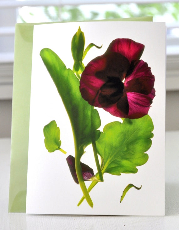 Note Card Floral Pansy Purple