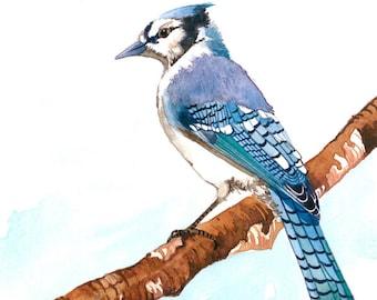 "Art print 5"" x 7"" -A blue jay, in watercolor"