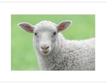Sweet Sheep - Happy Birthday to EWE