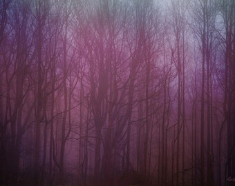 Forest Glow in Pink - Nature Photography - Dreamy Surreal Forest Trees in Fog Wall Art - Photograph 20x30