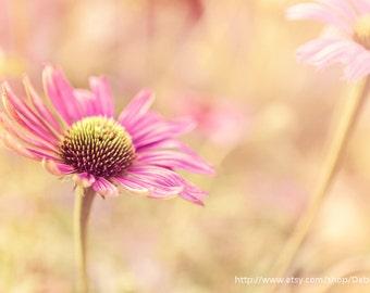 Summer Flower Garden -ConeFlower Pink Nature -Photograph - Home Decor  Fine Art Print -8x10 -16x24 -20x30
