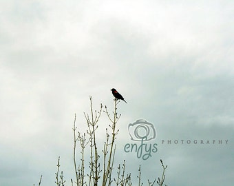 Wildlife Nature Photography - Fine Art Print - Quiet, Blue, Grey, Cloud, Sky,  Bird, Bare, Wall Art