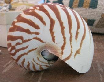 Natural Nautilis Shell - Coastal Home Decor - Seashells - Beach Wedding - Seashell Supply