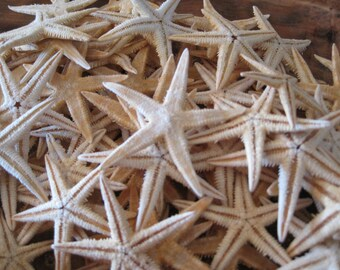 Beach Decor Natural Philippine Mini Starfish (10) - Starfish - Seashells - Seashell Supply - Coastal Home Decor - Beach Decor