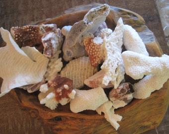 Beach Decor Coral Assortment (10) - Beach Decor - Coastal Home Decor - Natural Coral - Seashells, Shells