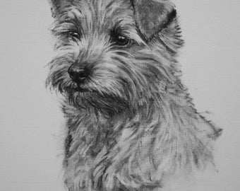Norfolk Terrier dog art fine art canine Limited Edition print from an original charcoal drawing