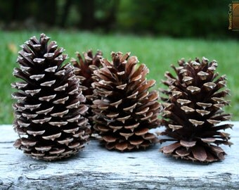 Pine Cones- Natural Basket Filler- Large Pine Cones- Rustic Vase Filler, Autumn wedding decorations, DIY Rustic Wedding supplies