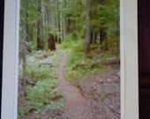Note Card- Hiking Trail In Forest- fir trees, wild plants, path, forest decor, fine art photograph