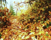 photography Autumn Leaves Serene Nature fallen leaves YELLOW