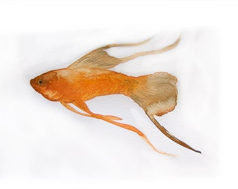 Orange fish paint by watercolor. Art original only. Small watercolors 7,5 by 11 inches