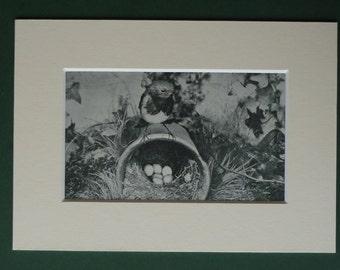 1920s Vintage Robin Print - Flower Pot Bird Nest - Ornithology - Natural History - Garden Bird Print - Vintage Nature Print - Photograph
