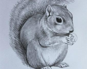 Cute Squirrel Drawing- Original Hand Drawn Pencil Artwork - Pencil - Animal Lover - Animal Artist - Fine Art