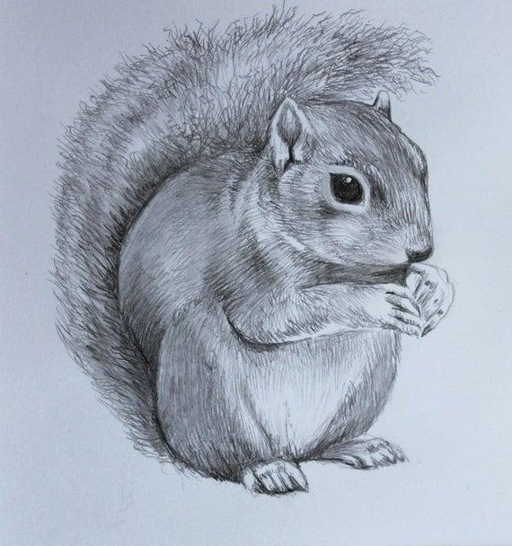 Cute Squirrel Drawing- Original Hand Drawn Pencil Artwork - Pencil ...