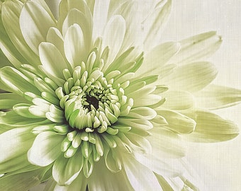 Flower Photography - Green - White - Vintage - Cottage Chic