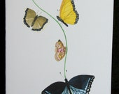 Butterfly Vine Watercolor Painting Notecard