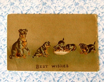 Vintage Mother Dog & Puppies Best Wishes Post Card Embossed