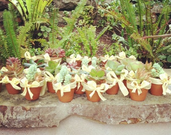 Baby shower succulent favors  65 pack