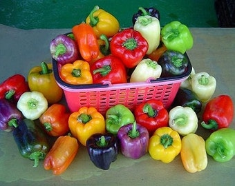 Colorful bell pepper seeds,14, mixed bell peppers, gardening, vegetable seeds