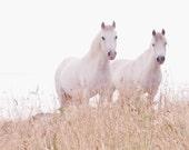 Horse Art, White Horse Photography, 8x8 fine art print, equine art, wall art, home decor,
