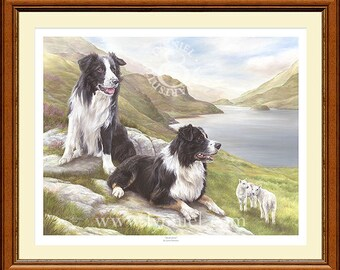 BORDER COLLIES limited edition dog print 'Awareness' by Lynn Paterson
