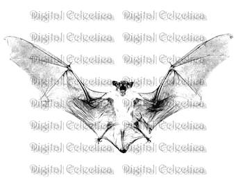 Vampire Bat Halloween. Vampire PNG. Bat PNG. Halloween PNG. Vampire Bat Print. Vampire Bat Image. Vampire Bat Picture. Bat Clipart No. 0081