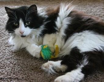 Playful Cat Pet Photography